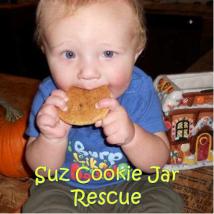 Suz Cookie Jar Rescue   Summerset Festival 2021